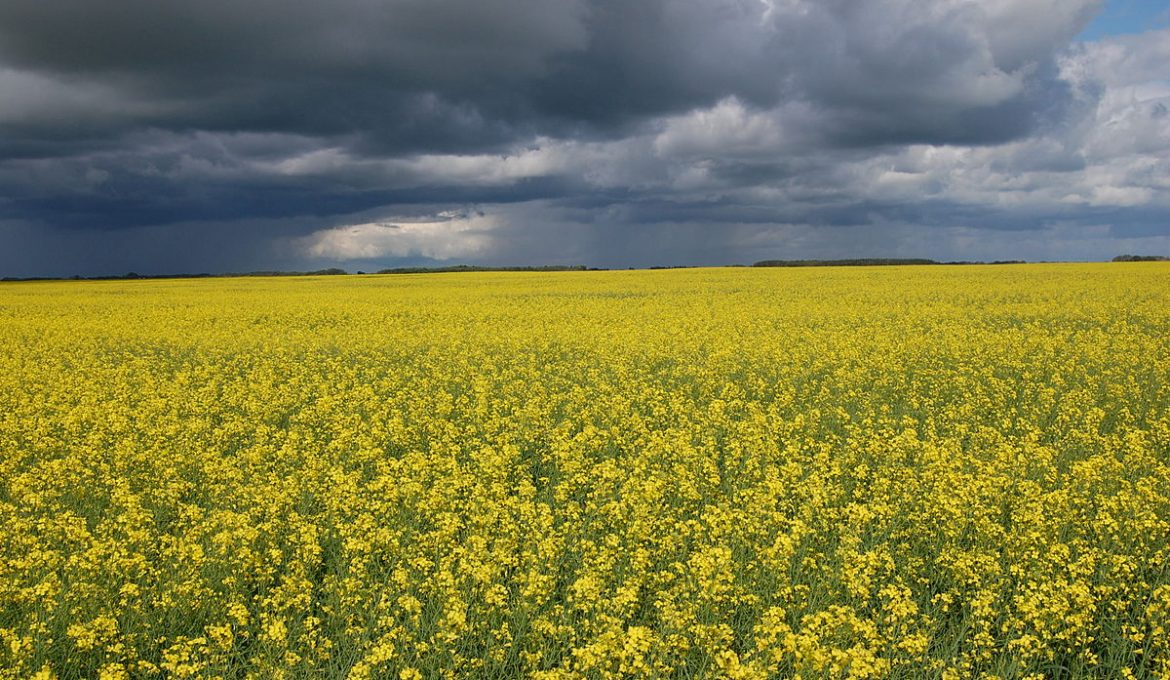 Canada's Big Sky Country: things to do in Saskatchewan this summer